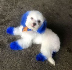The Hottest Hairstyles for Your Dogs Dog Hair Dye, Dog Dye, Baby Puppies, Cute Puppies, Cute Dogs, Animals Beautiful, Cute Animals, Beautiful Creatures, Dog Haircuts