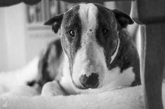 Jack White Iris, Monochrome, Black And White, Dogs, Life, Animals, Black White, Animales, Blanco Y Negro