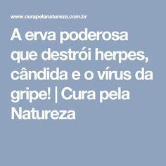 A erva poderosa que destrói herpes, cândida e o vírus da gripe!   Cura pela Natureza