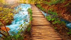 magnificent wooden pathway wallpaper