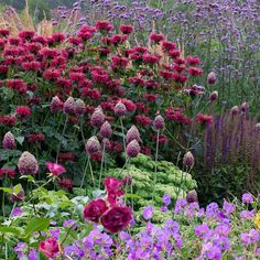 Stunning shades of reds and purples in this garden by @nichoward