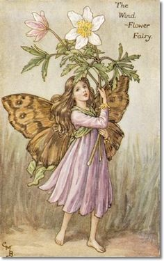 Cicely Barker The wind flower fairy More