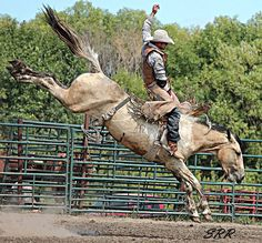 Wild Man Bucking Horses from ND