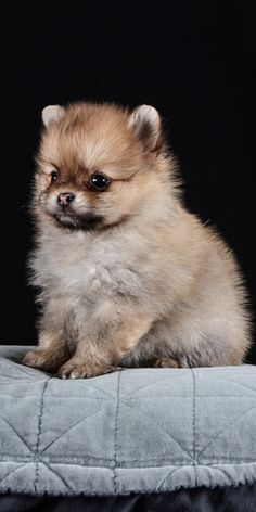 When it comes to adopting a pet, we all know that the Cutest Dog Breeds are on the top of this list.  #breedingdogs #cooldogbreeds #differentdogbreeds #cutestdogbreeds #petdogsbreeds #dogbreedsmix #dogsbreedscutest #funnydogpictures #dogandpuppy #cutedogs Cute Dogs Breeds, Dog Breeds, Different Dogs, Teacup Puppies, Funny Dog Pictures, Best Dogs, Dogs And Puppies, Adoption, Cute Animals