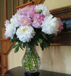pink and white peonies in a tiffany vase, 2011