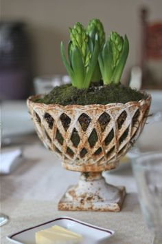 great pot for forcing bulbs