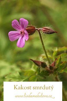 Dandelion, Garden, Flowers, Plants, Garten, Dandelions, Lawn And Garden, Gardens, Plant