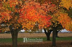 Making MOMENTS into MEMORIES! www.patriciapucke... and LIKE ME on Facebook at: patricia puckett photography