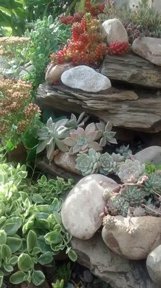 14 front yard rock garden landscaping ideas 25 river rock garden ideas for beautiful diy designs Succulent Rock Garden, Succulent Landscaping, Dry Garden, Succulent Gardening, Front Yard Landscaping, Cacti And Succulents, Garden Pots, Landscaping Ideas, Balcony Gardening