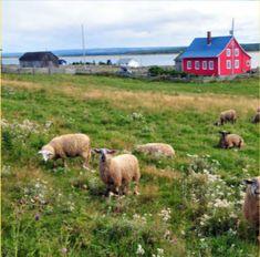 Lac Saint Jean, Explorer, Dog Food Recipes, Saint Laurent, Pets, North America, Paths, Rural Area, Landscapes