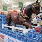 Budlight Clydesdale spectacular display