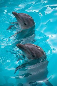 [Dolphins] via Omar Andrade Jimenez - Delfines Cancun | Nado con Delfines  Cancún Quintana Roo