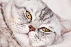 Cat lying by TalyaPhoto on @creativemarket