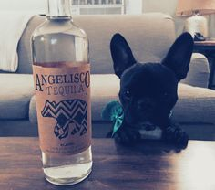 Hey bartender pour me some @angeliscotequila #blanco  #tequila #frenchies1 #french_bulldogs #mannysbuddyoftheweek #mannyandfriends #mydogiscutest #weeklyfluff #ruffpost #TopDogPhoto #thefrenchiepost #ig_bullys #instadaily #puppy #poochpal #LOVEABULLY #lacyandpaws #mydogiscutest #bestwoof #bullyinstafeature #buzzfeedanimals #Dog_Features #dogs_of_world #dogsbeingbasic #squishyfacecrew #animalbuzz #ad #thebest #boozehound #stpatricksday #happystpattysday by bulldogbatman