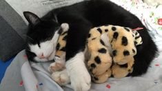 My cat and his baby cheetah friend by greta2837 cats kitten catsonweb cute adorable funny sleepy animals nature kitty cutie ca