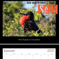 Birds of the Galapagos calendar Check it out for your chance to get this unique and limited calendar. Hanukkah 2019, Galapagos Islands, Calendar 2020, Wildlife Photography, Ecuador, Travel Destinations, Exotic, Photo Gifts, Birds