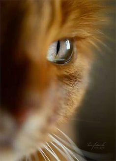 〇 Eye Images, Eyes, Animals, Animales, Animaux, Animal, Animais, Cat Eyes
