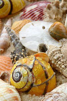 Sea Shells, Sand dollar on the beach.
