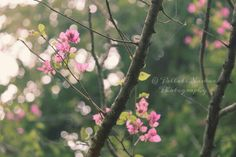Nature photography. PicsArt be amazing. Bokeh.
