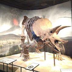 Triceratops Dinosaur Fossils, Science Museum, Vertebrates, Jurassic Park, Prehistoric, Reptiles, Minnesota, Rocks, The Past