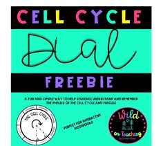 This little activity is so effective in teaching the concepts of the cell cycle and helps students to identify and remember the sequence of phases with ease!