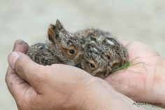 Bunnies! - so tiny & adorable.. look like the ones we used to catch in our yard in the summers