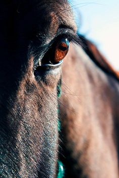 No philosophers so thoroughly comprehend us as dogs and horses.  They see through us at a glance. ~Herman Melville