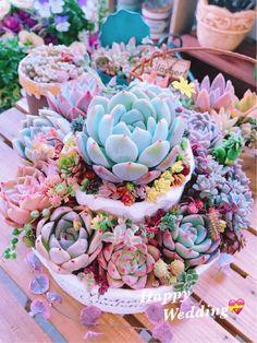 Types Of Succulents, Colorful Succulents, Cacti And Succulents, Planting Succulents, Cactus Plants, Planting Flowers, Succulent Landscaping, Succulent Gardening, Succulent Terrarium