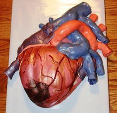 This is the coolest cake I have ever seen. I want one like this when I graduate from med school. I call the right atrium!