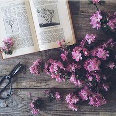 photo by @the_vintage_palace #regram 植物アプリの決定版 http://greensnap.jp  #植物好きと繋がりたい  #ボタニカル#ドライフラワー #多肉#多肉植物#多肉バカ同盟 #観葉植物 #ガーデニング #グリーンインテリア #園芸 #フラワー #花のある暮らし  #succulents #cactus#gardening #containergarden #flowerstagram #greenthumb #greenlife #containergarden #botanical#珍奇植物 #サボテン #ユーフォルビア #パキポディウム #根塊植物 #caudex
