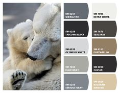 """Polar Bear"" Color Palette Inspiration for exterior craftsman home paint color scheme, stone accent colors, shingle choice, and landscaping. Chip It! by Sherwin-Williams – Home"