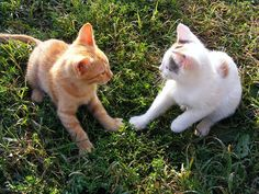 How to introduce cats to each other