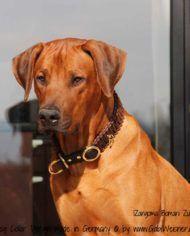 Hundehalsband mit Zugstopp für große Hunde