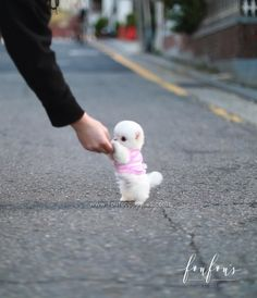 Cute Teacup Puppies, Cute Baby Puppies, Super Cute Puppies, Baby Animals Super Cute, Teacup Pomeranian, Tiny Puppies, Pomeranian Puppy For Sale, Teacup Maltese, Baby Animals Pictures