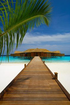 ♂ Life at the beach Maldives Luxury all-inclusive resort - Welcome to Lily Beach - Maldives