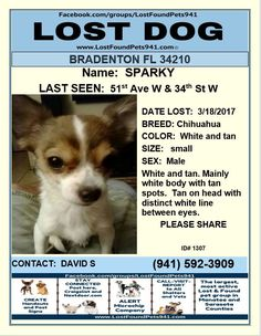 Have You Seen Sparky Lostdog Missing Chihuahua Plese Rt