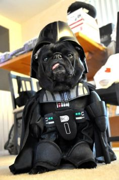 Darth doggie!