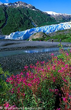 Exit Glacier - Alaska I lived here! This was at the end of my road...miss it so much!