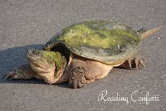 All about turtles - using a real life event as an opportunity to encourage a love of reading!