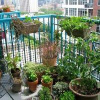 erbe balcone 4