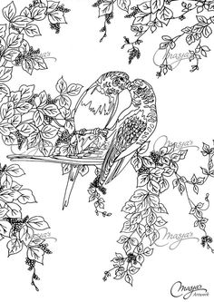 Masjas Lovebirds Coloring Page made by Masja van den Berg - featuring 1 hand-drawn design for you to bring to life with color! Do you love the