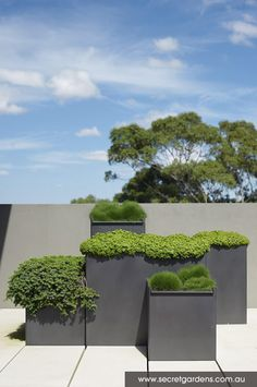 Outdoor Terraces: Glebe, Austalia simple metal planters with low maintenance plants in a contemporary plan