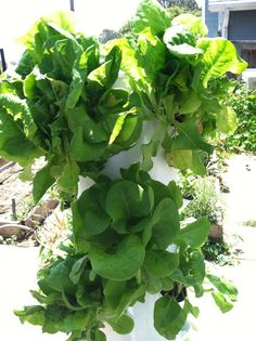 nutiva.com - Grow Your Own Food! Easy Ideas for Growing a #Vegetable #Garden with Little Space.