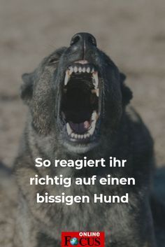 #hund #dog #angst #bissig #beißen #angst #reaktion #haustier #verhalten #focusonline #lifehack