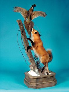 With the sudden and shocking death of Brian Harness of Harrison, Arkansas this week, I looked through my files to find an appropriate photo for the Taxidermy.Net Forum. Brian was such a talented ar...