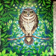 Owl- The Secret Garden. Inspired by Chris Cheng. Prismacolor Pencils Premier.
