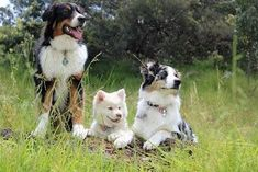 Paws, Claws & Tails runs dog obedience training and puppy training & socialisation for dog owners in the Gatton & Lockyer Valley Region. Bearded Collie, Lyme Disease In Dogs, Pet Dogs, Dogs And Puppies, Westie Puppies, Doggies, Pet Shop Online, Group Of Dogs, Pet Shop Boys