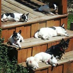 On se la coule vraiment douce chez Machu Pitou Chihuahua   www.machupitouchihuahua.com