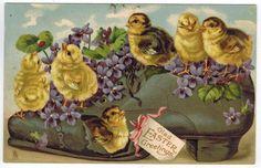 Pretty Antique Easter Postcard Chicks on Old Shoe Rapheal Tuck DB 1907 DB | eBay