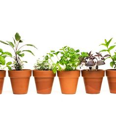 How to Grow Delicious Herbs in Containers